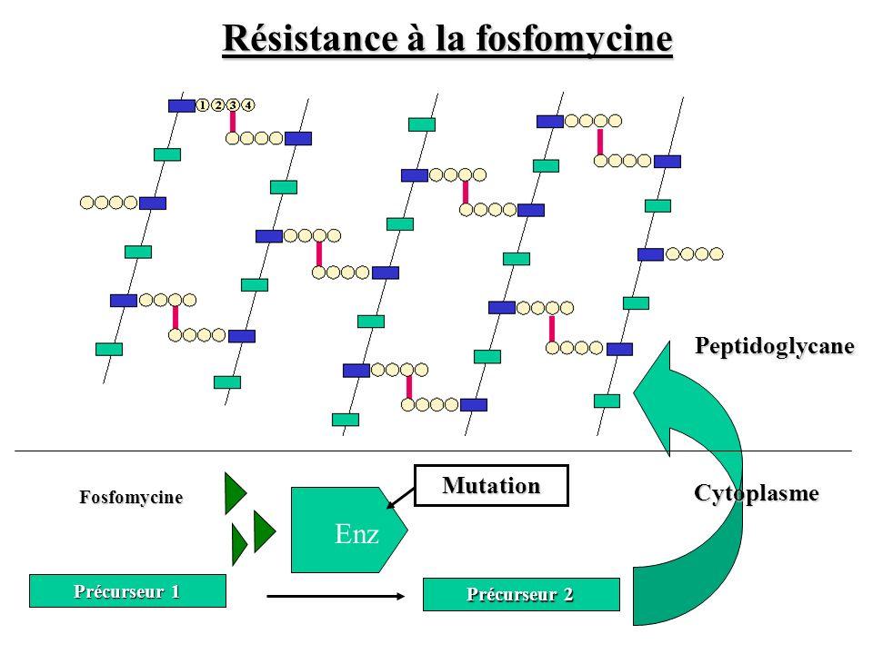 Résistance à la fosfomycine