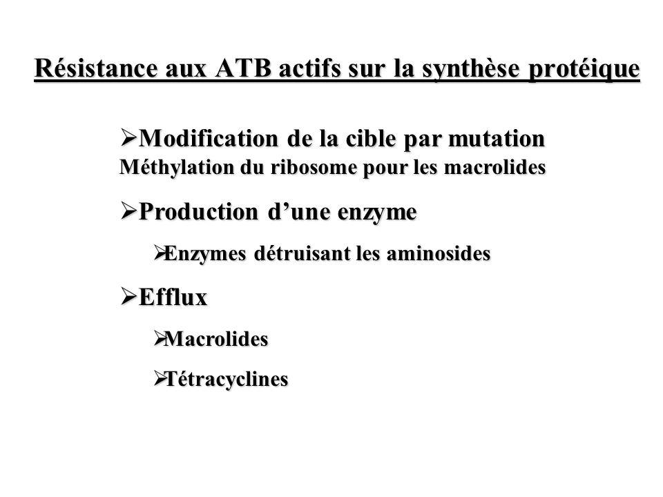 Résistance aux ATB actifs sur la synthèse protéique