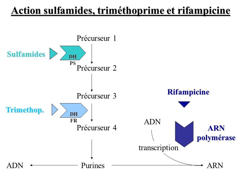 Action sulfamides, triméthoprime et rifampicine