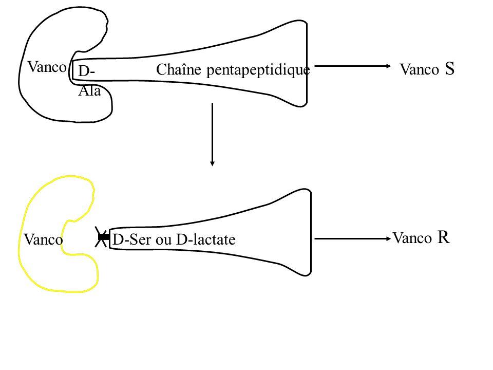 Chaîne pentapeptidique