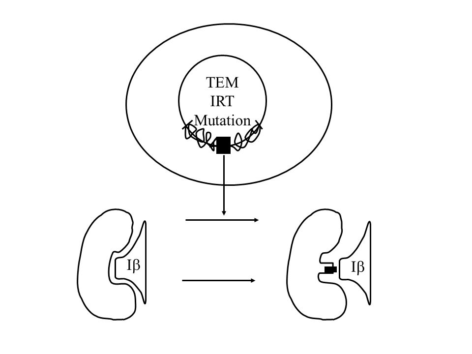 TEM IRT Mutation I I