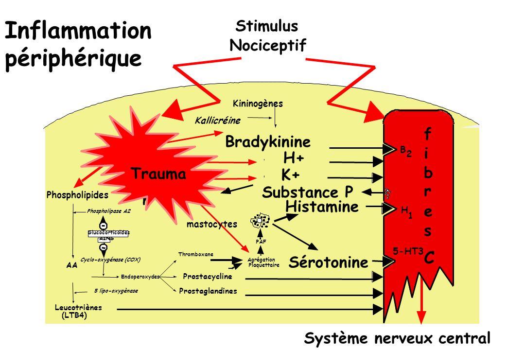 Inflammation périphérique C Stimulus Nociceptif f Bradykinine i H+