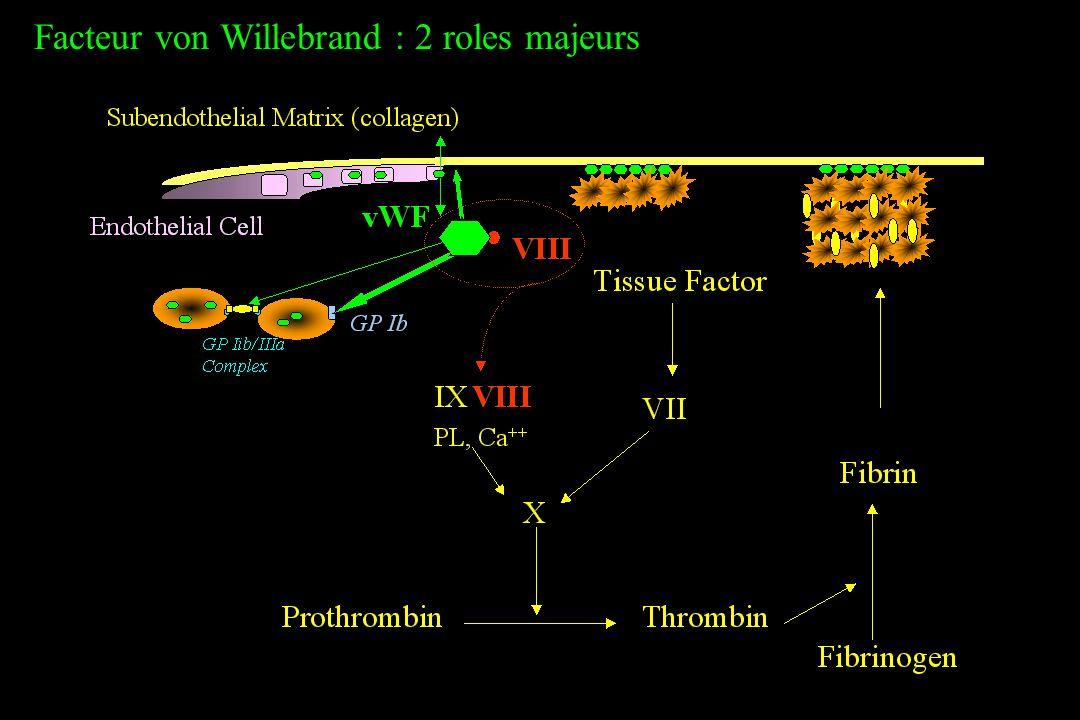 Facteur von Willebrand : 2 roles majeurs