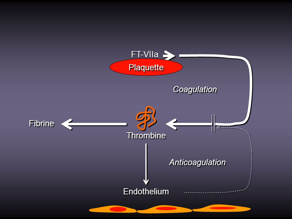 FT-VIIa Plaquette Coagulation Fibrine Thrombine Anticoagulation Endothelium