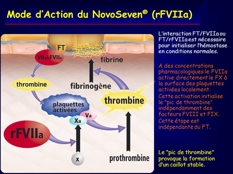 Mode d'Action du NovoSeven® (rFVIIa)