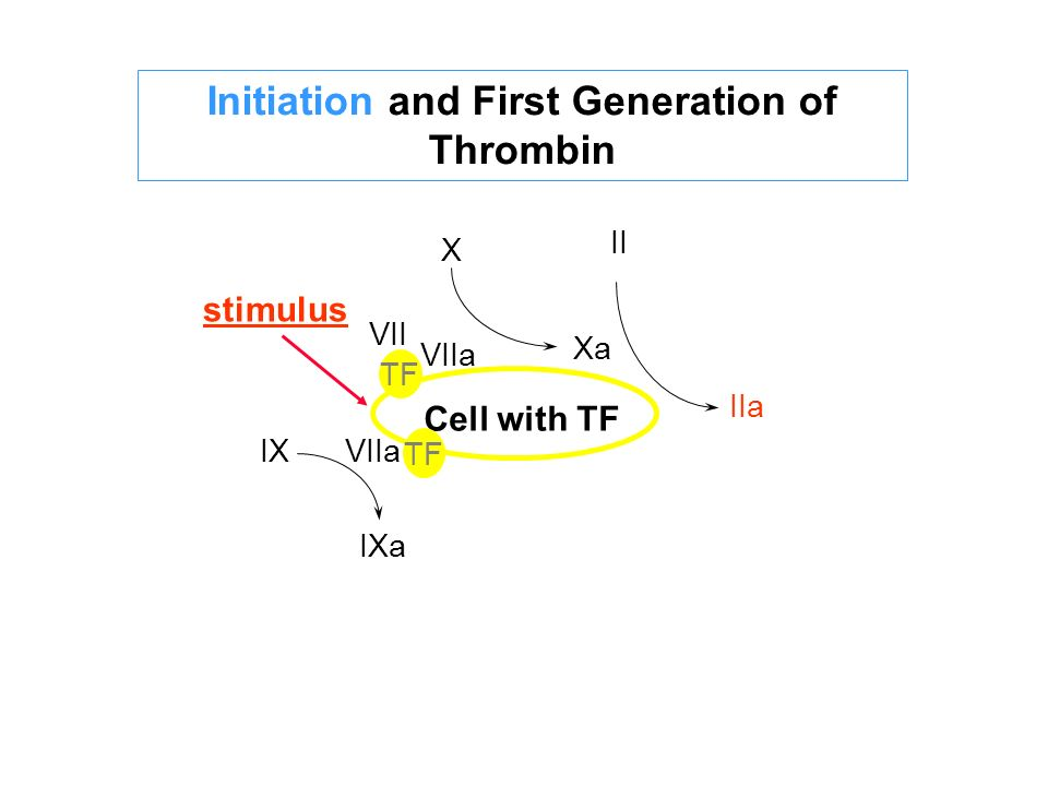 Initiation and First Generation of Thrombin