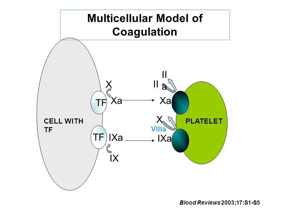 Multicellular Model of Coagulation