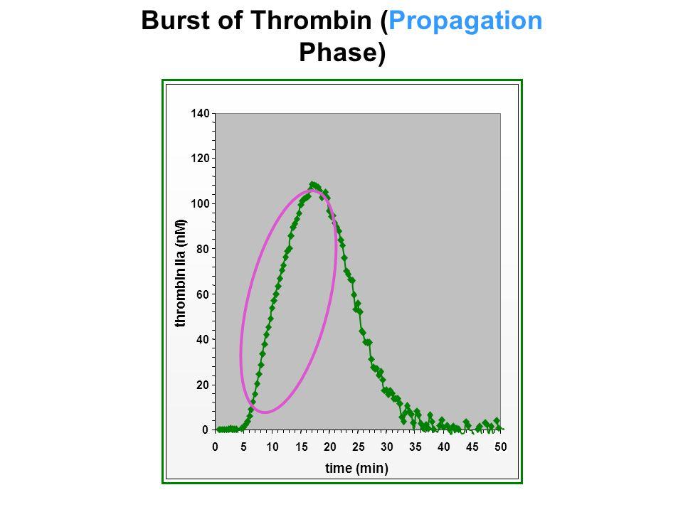 Burst of Thrombin (Propagation Phase)