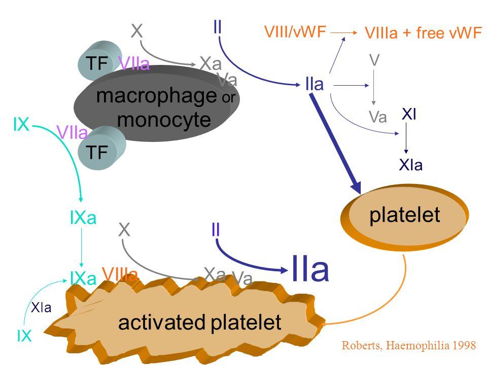 IIa macrophage or monocyte platelet activated platelet II X TF VIIa Xa