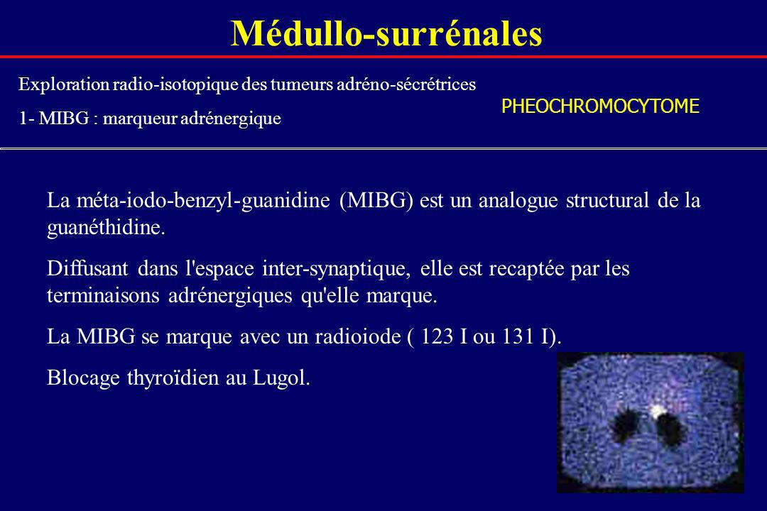 Médullo-surrénalesExploration radio-isotopique des tumeurs adréno-sécrétrices. 1- MIBG : marqueur adrénergique.