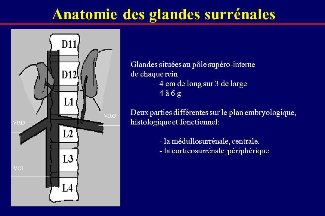 Anatomie des glandes surrénales
