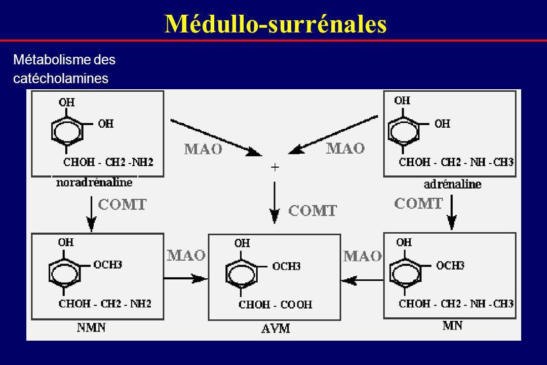Médullo-surrénales Métabolisme des catécholamines