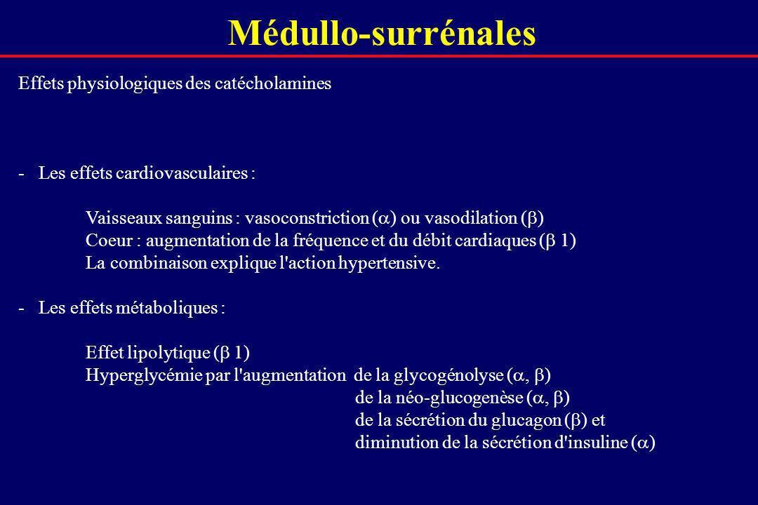 Médullo-surrénales Effets physiologiques des catécholamines