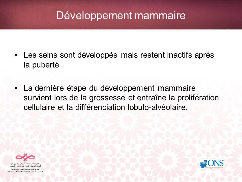 Développement mammaire