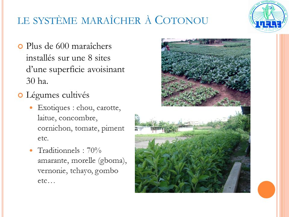 le système maraîcher à Cotonou