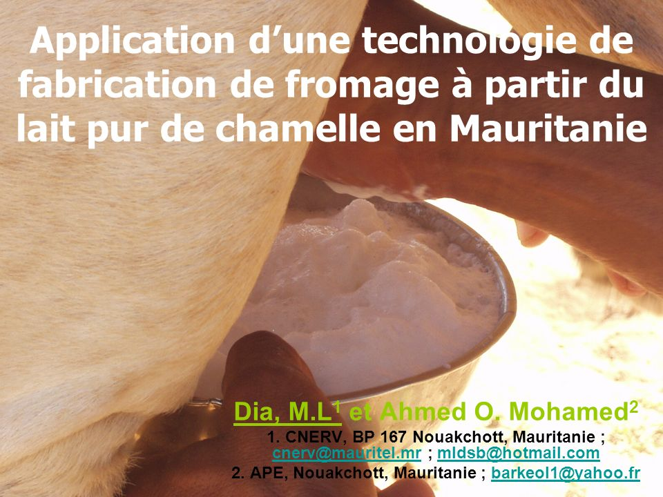 Application d'une technologie de fabrication de fromage à partir du lait pur de chamelle en Mauritanie