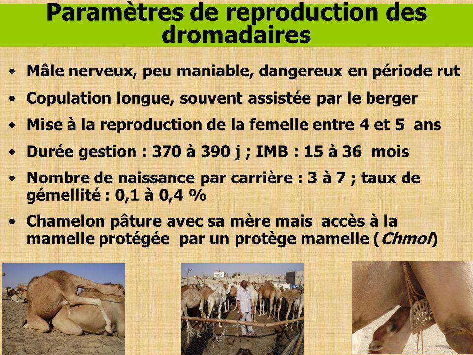 Paramètres de reproduction des dromadaires