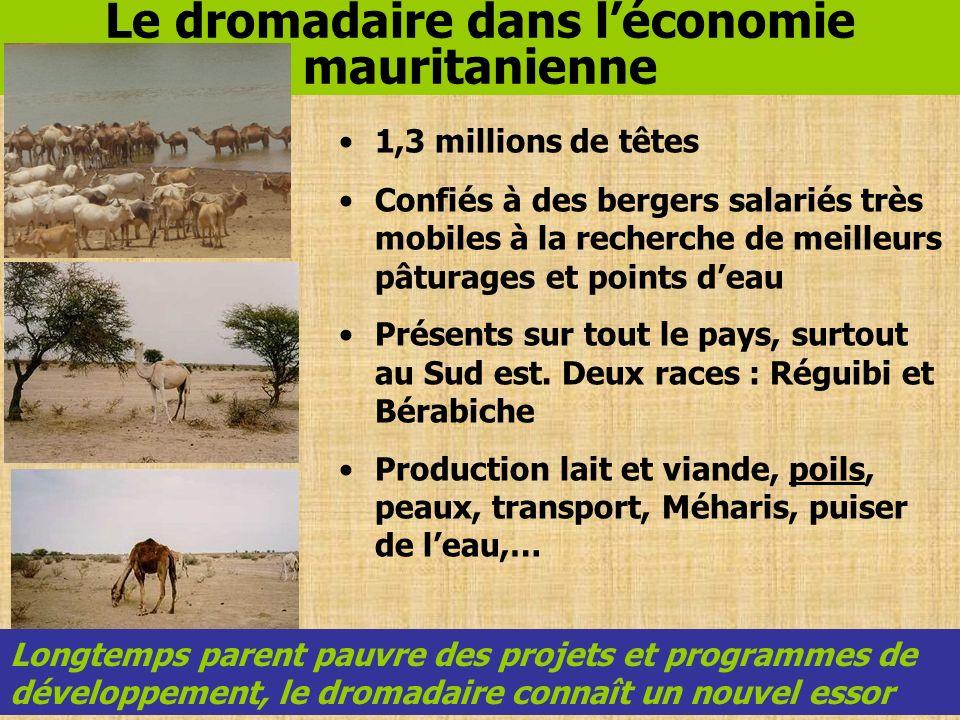 Le dromadaire dans l'économie mauritanienne