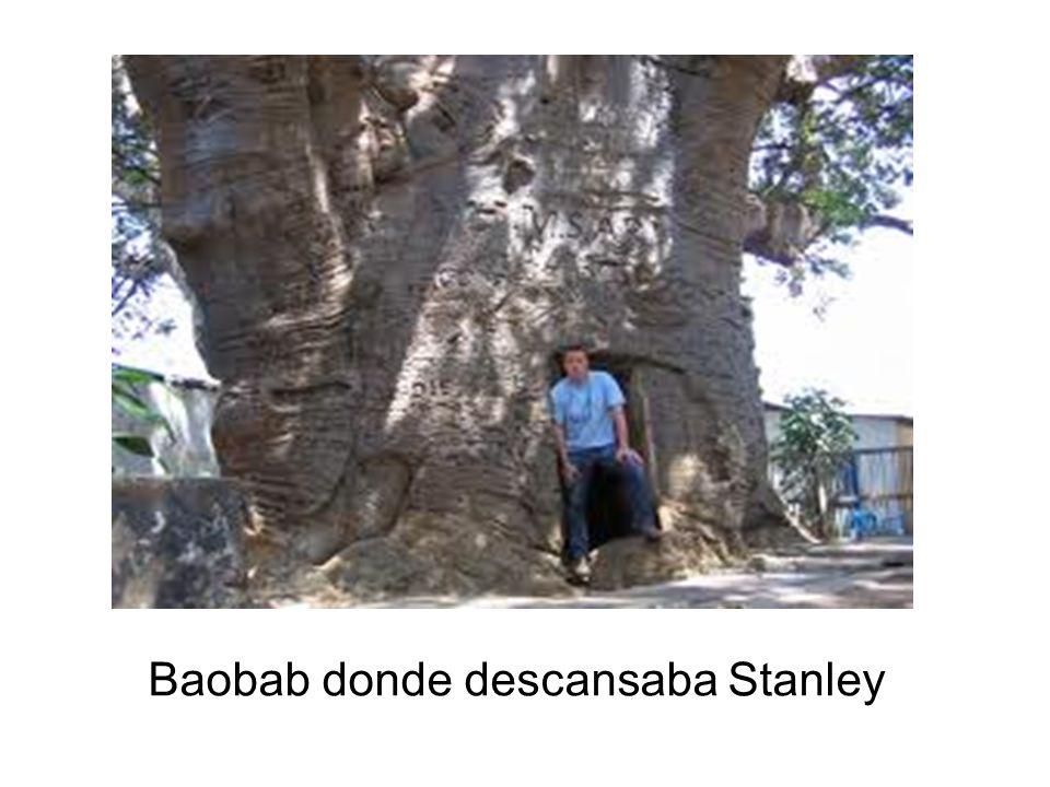 Baobab donde descansaba Stanley