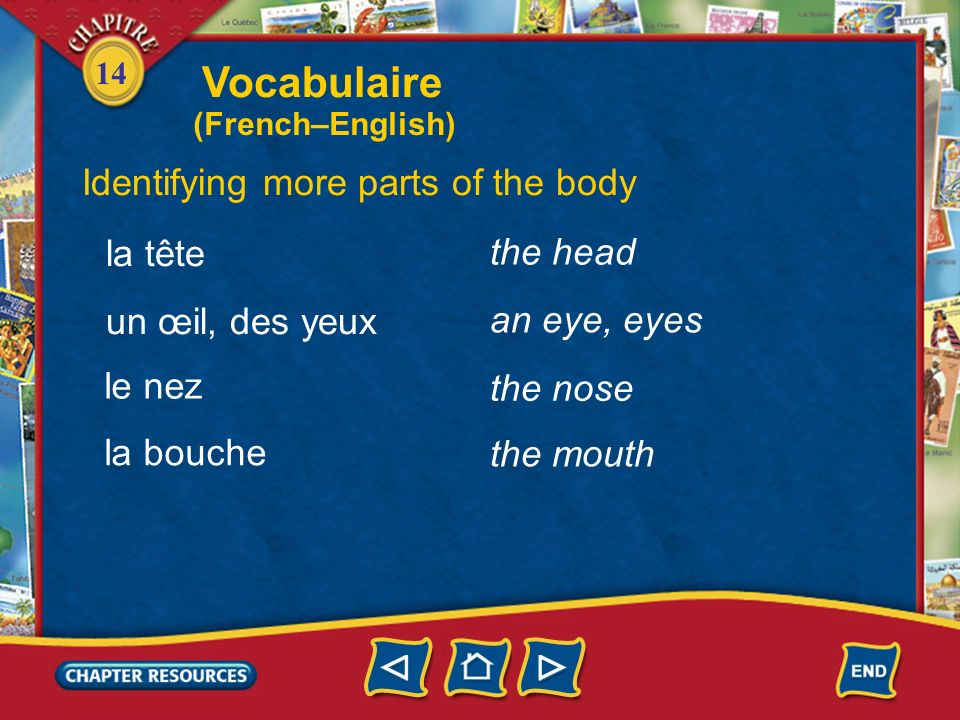 Vocabulaire Identifying more parts of the body la tête the head