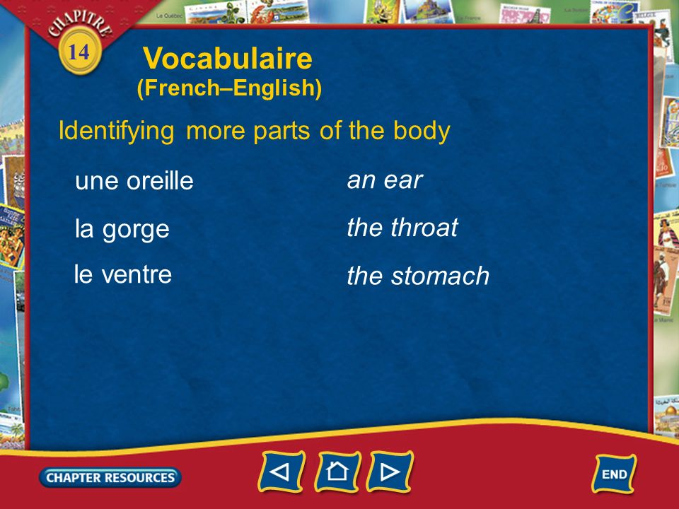 Vocabulaire Identifying more parts of the body une oreille an ear