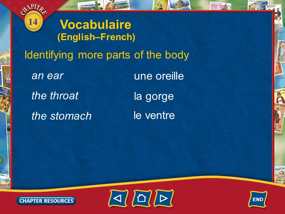 Vocabulaire Identifying more parts of the body an ear une oreille