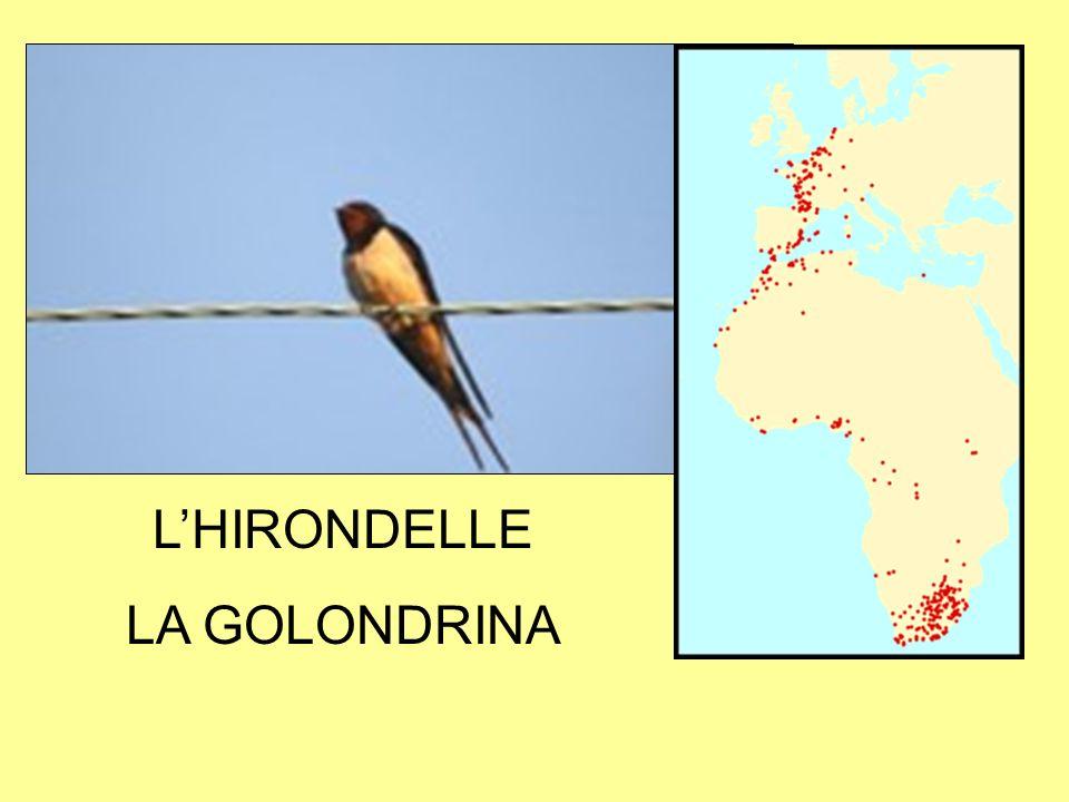 L'HIRONDELLE LA GOLONDRINA