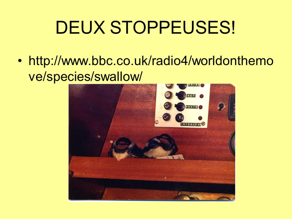 DEUX STOPPEUSES! http://www.bbc.co.uk/radio4/worldonthemove/species/swallow/