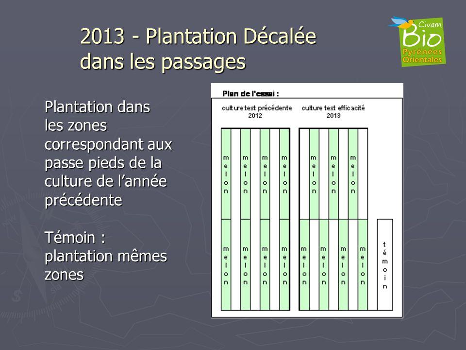 2013 - Plantation Décalée dans les passages