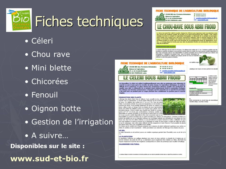 Fiches techniques Céleri Chou rave Mini blette Chicorées Fenouil