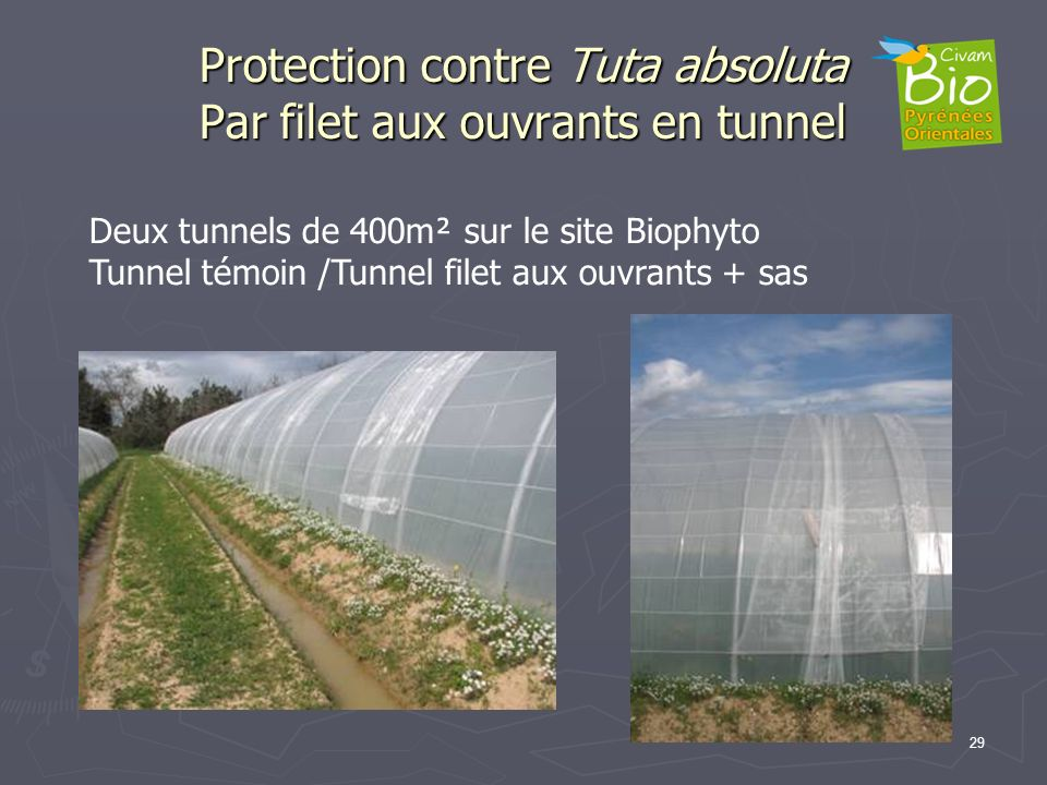 Protection contre Tuta absoluta Par filet aux ouvrants en tunnel