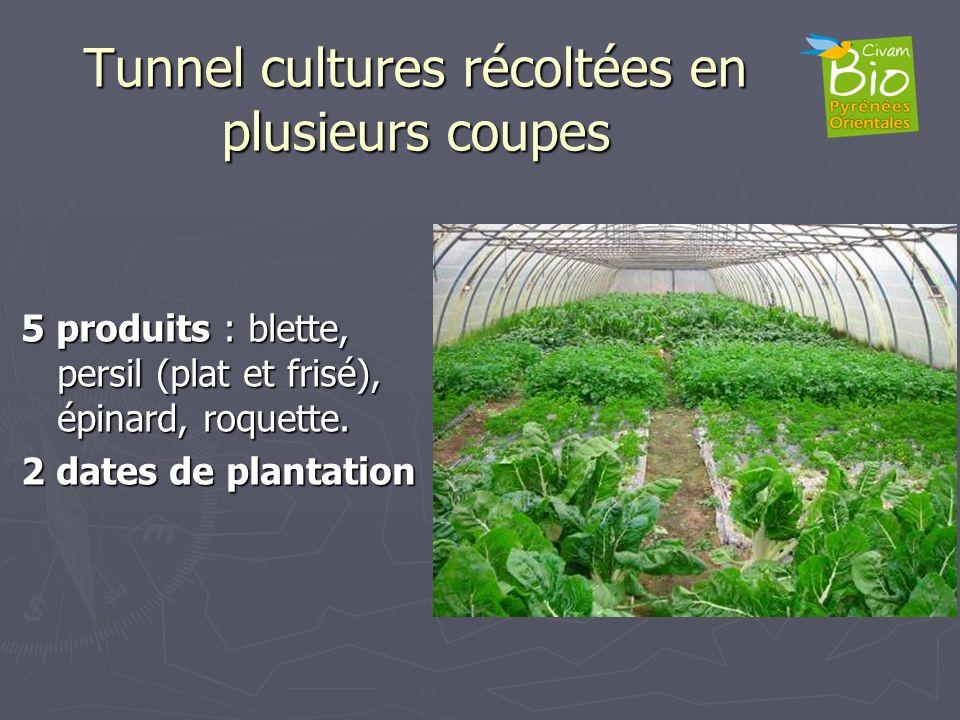 Tunnel cultures récoltées en plusieurs coupes