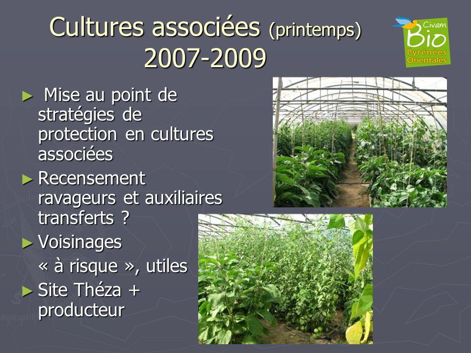 Cultures associées (printemps) 2007-2009