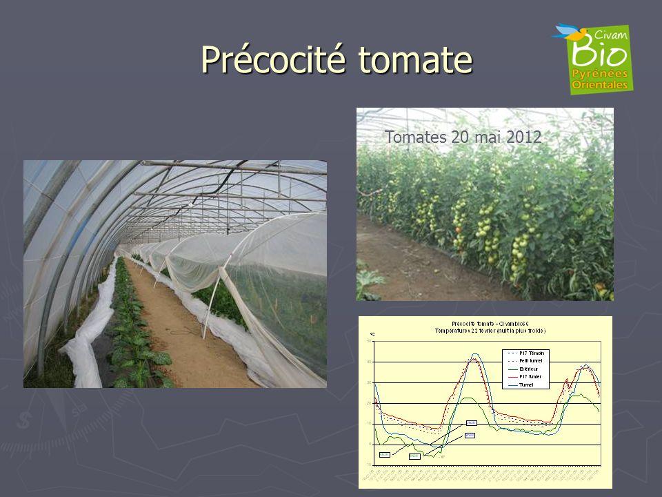 Précocité tomate Tomates 20 mai 2012