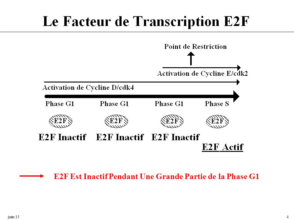 regulation du cycle cellulaire pdf