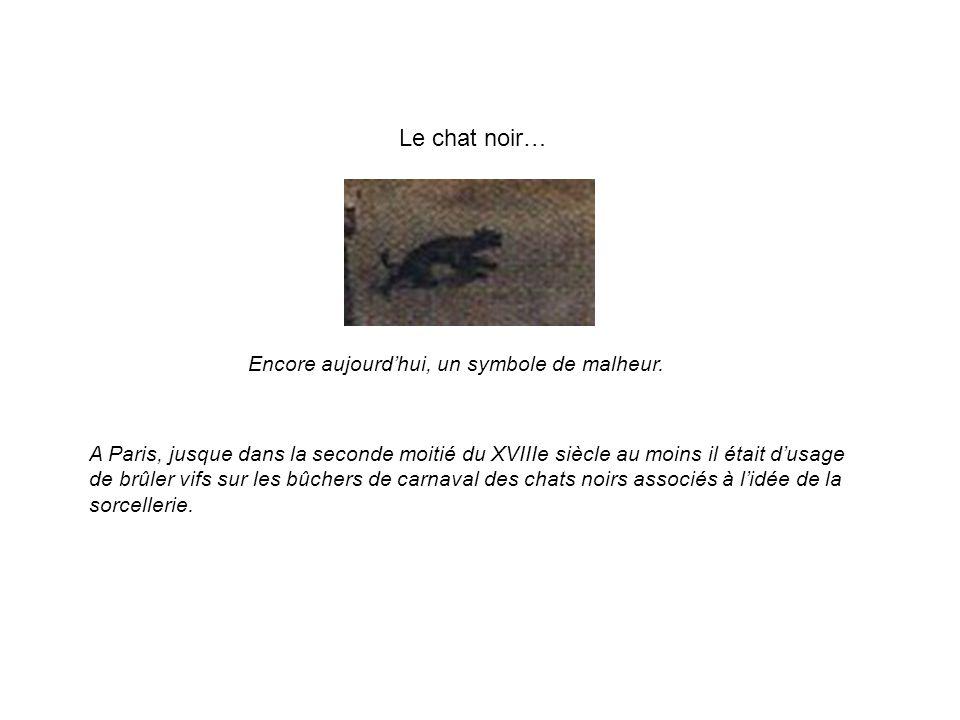 Le chat noir… Encore aujourd'hui, un symbole de malheur.