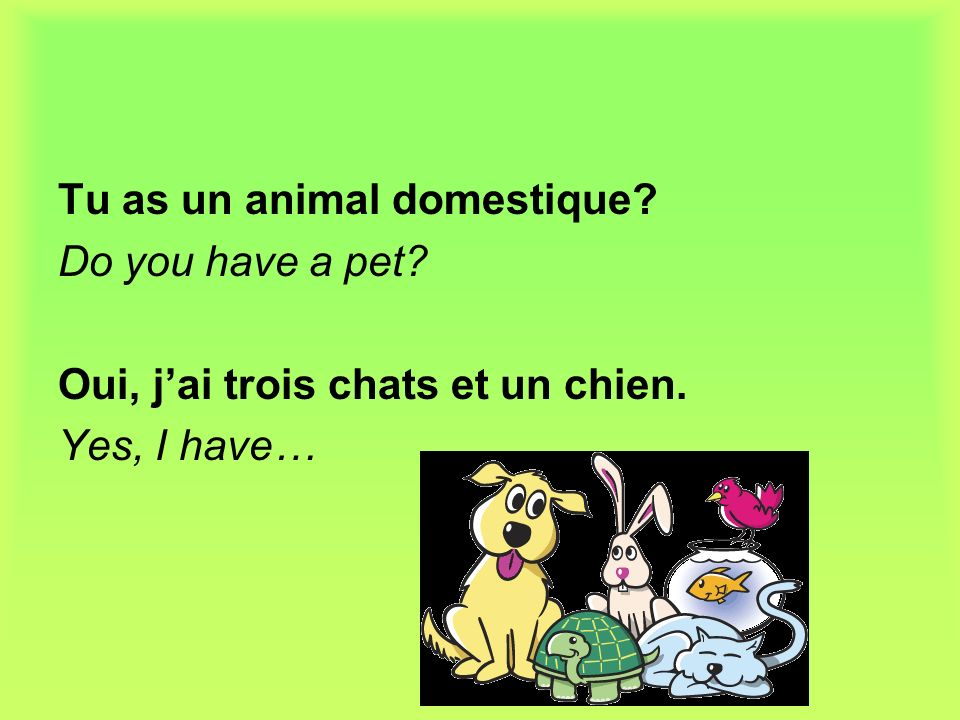 Tu as un animal domestique. Do you have a pet