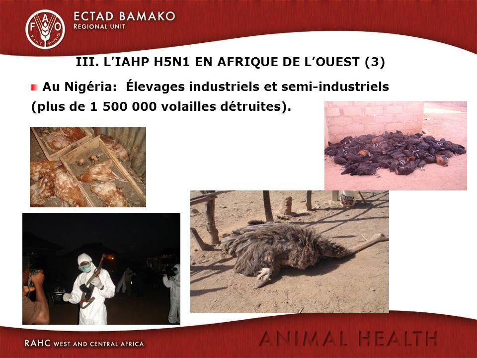III. L'IAHP H5N1 EN AFRIQUE DE L'OUEST (3)