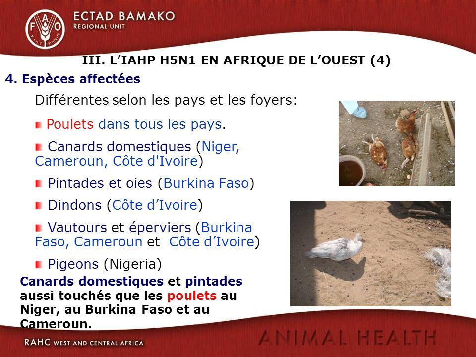 III. L'IAHP H5N1 EN AFRIQUE DE L'OUEST (4)