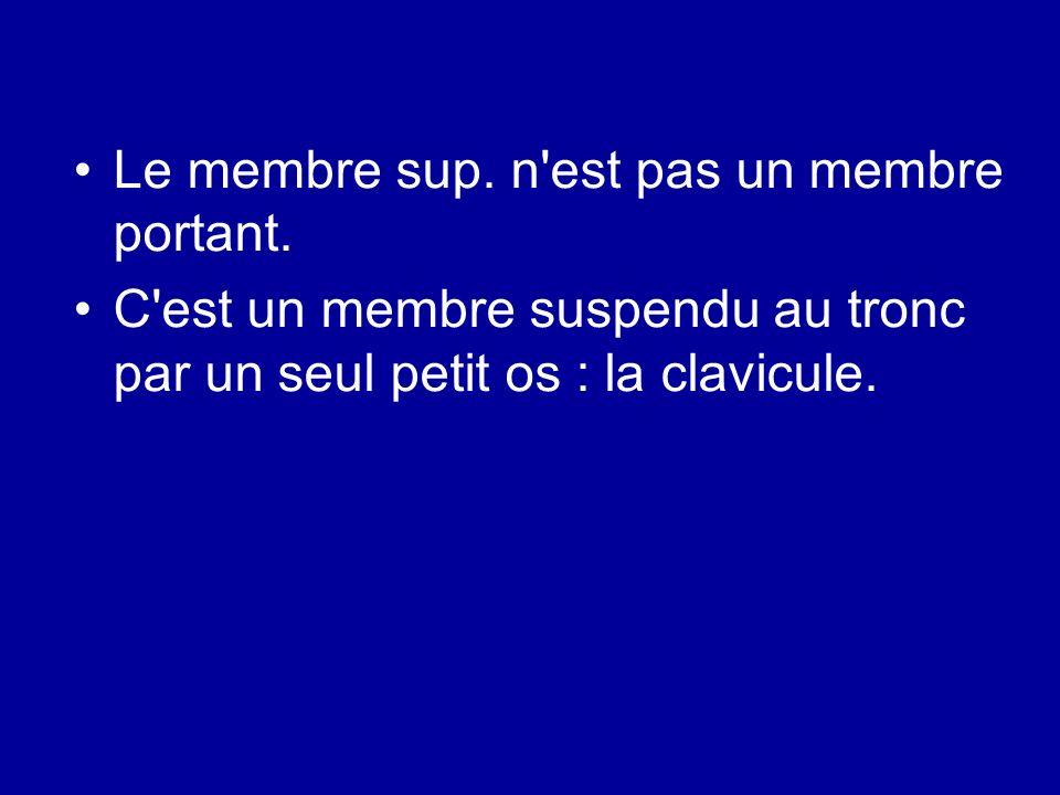 Le membre sup. n est pas un membre portant.