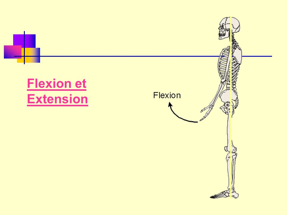 Flexion et Extension