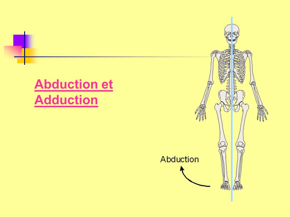 Abduction et Adduction