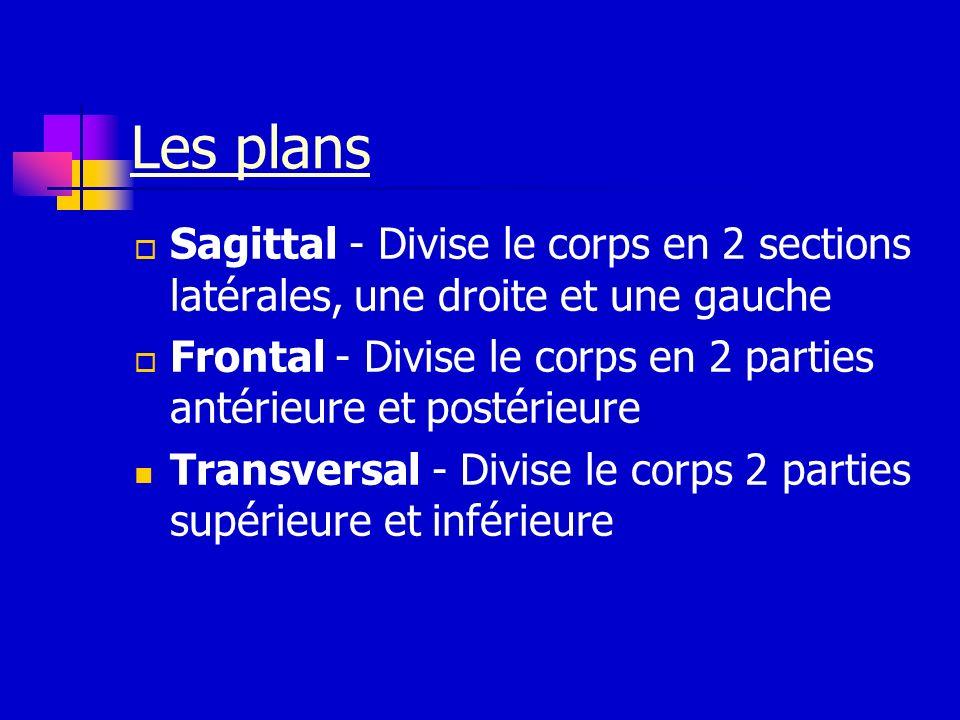 Les plans Sagittal - Divise le corps en 2 sections latérales, une droite et une gauche.