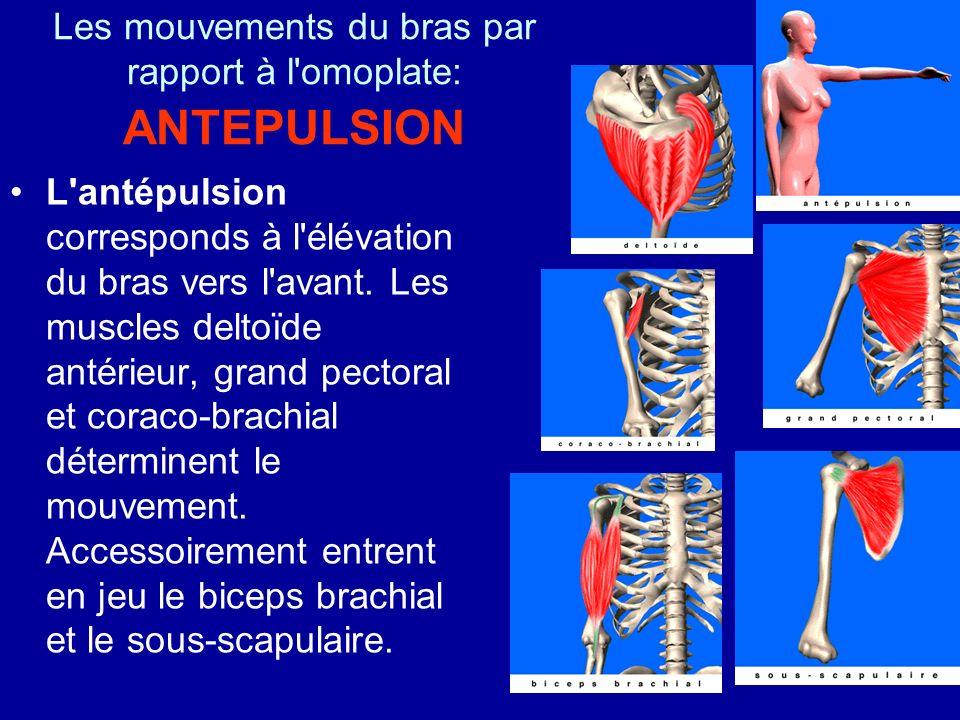 Les mouvements du bras par rapport à l omoplate: ANTEPULSION