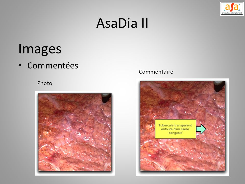 AsaDia II Images Commentées Commentaire Photo
