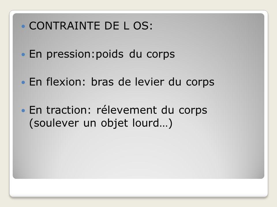 CONTRAINTE DE L OS: En pression:poids du corps. En flexion: bras de levier du corps.