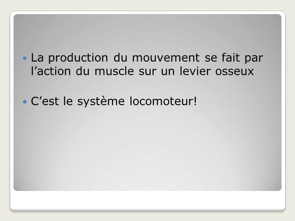 La production du mouvement se fait par l'action du muscle sur un levier osseux