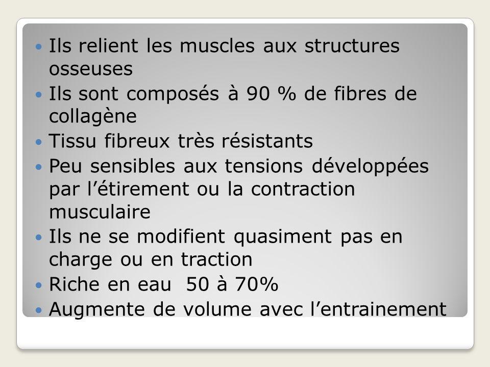 Ils relient les muscles aux structures osseuses