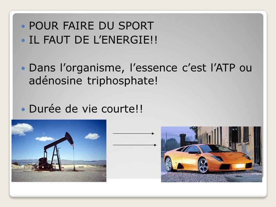 POUR FAIRE DU SPORT IL FAUT DE L'ENERGIE!! Dans l'organisme, l'essence c'est l'ATP ou adénosine triphosphate!