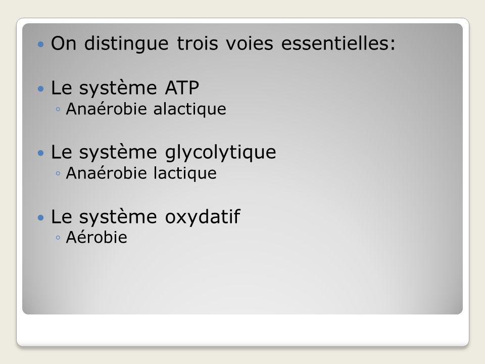 On distingue trois voies essentielles: Le système ATP
